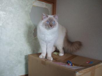 2007_0507inugao1643.jpg