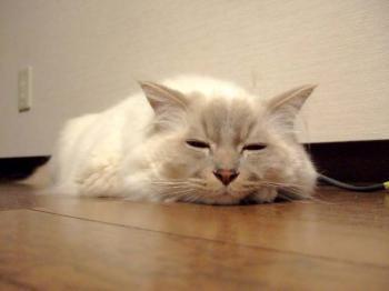2007_0507inugao1653.jpg