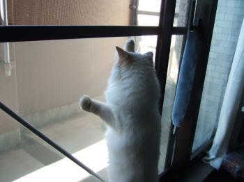 2007_0521inugao1482.jpg