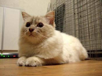 2007_0523inugao0510.jpg