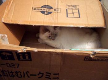 2007_0523inugao1491.jpg