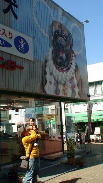 闘犬センター @桂浜