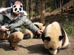 夫とパンダ1