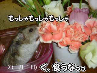 060908_5.jpg