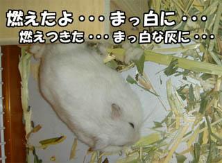 060917_3.jpg