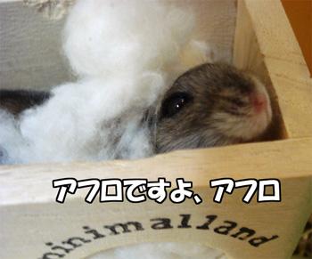 080115_3.jpg