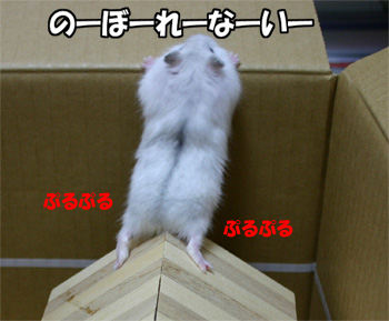 080528_4.jpg