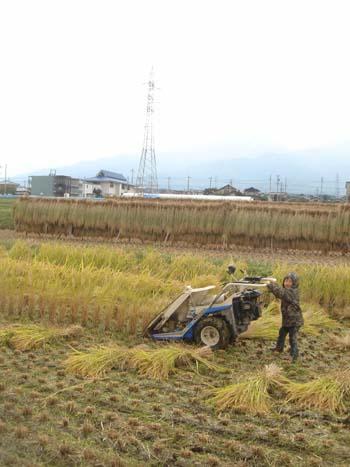 稲刈り①2008