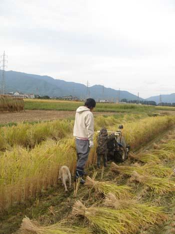 稲刈り②2008