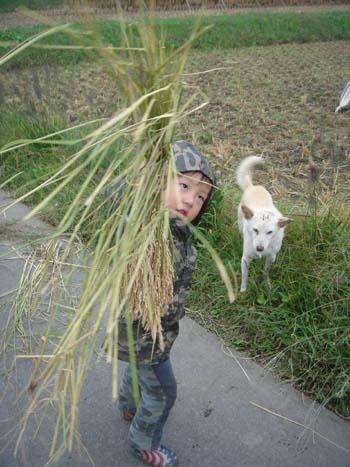 稲刈り③2008