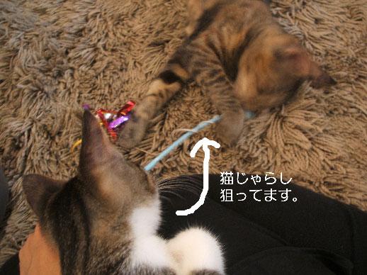 blog-neko2.jpg