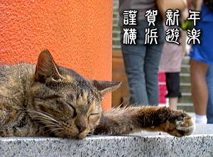 江ノ島猫たん