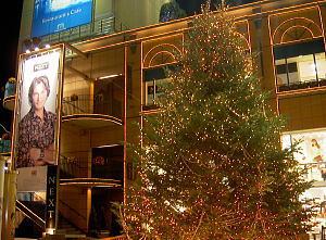 生木のクリスマスツリー