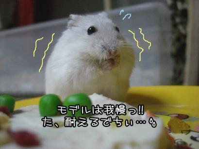 加工すみれ1.15②