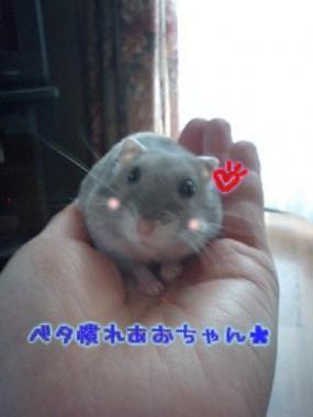 加工あおちゃん1.20