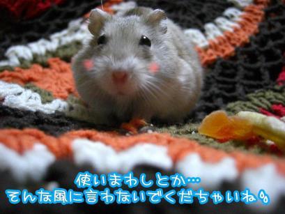 加工ショコラ3.11①+1