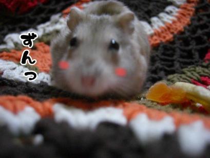 加工ショコラ3.11②+1
