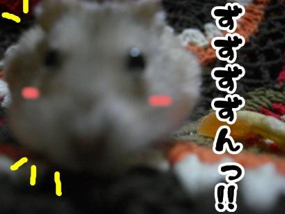 加工ショコラ3.11④+1