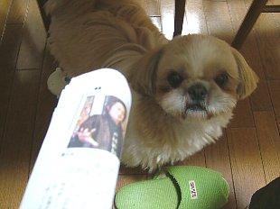 2006_0223nenndo20010.jpg