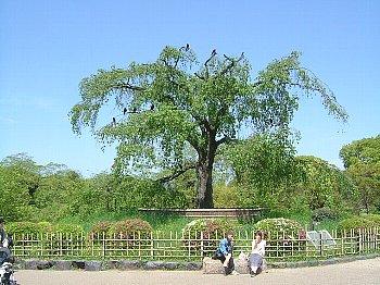 2006_0503anenndo20001.jpg
