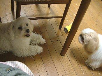 2006_0511nenndo20014.jpg