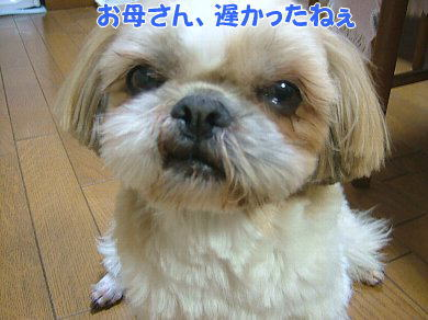 image1011.jpg