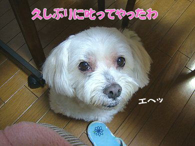 image1017.jpg