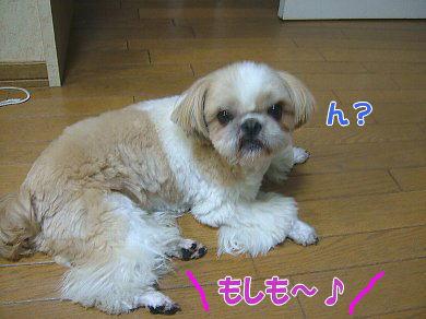 image1027.jpg