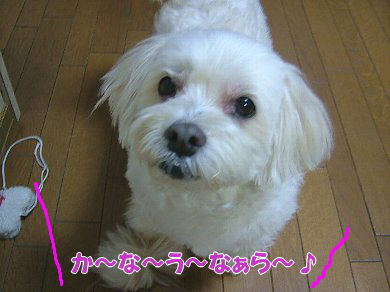 image1029.jpg
