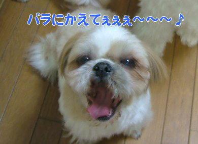 image1032.jpg