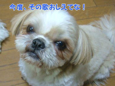 image1033.jpg