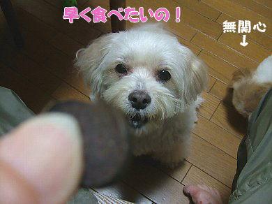 image1038.jpg