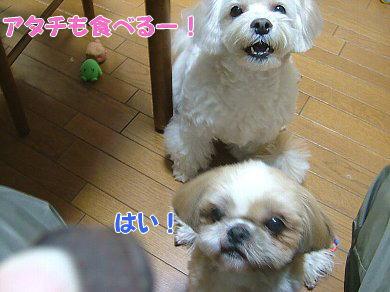 image1039.jpg