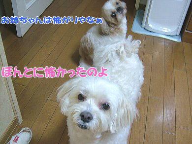 image1045.jpg