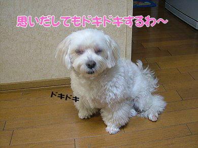 image1046.jpg
