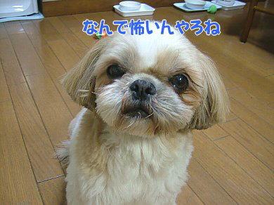 image1047.jpg