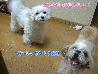 image1053.jpg