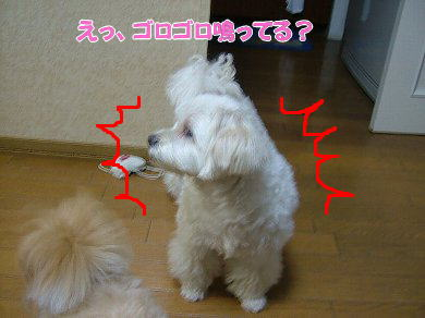 image1057.jpg