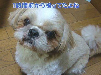 image1058.jpg