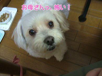 image1059.jpg