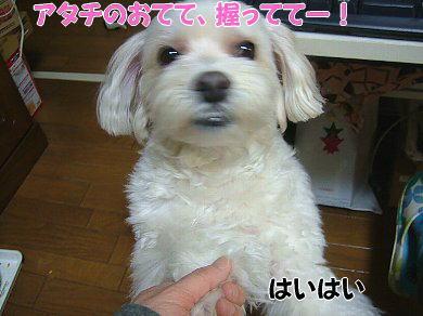 image1060.jpg