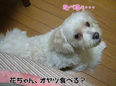 image1061.jpg
