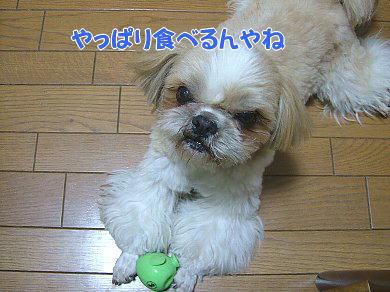 image1062.jpg