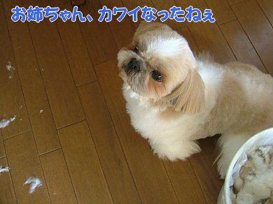 image1063.jpg
