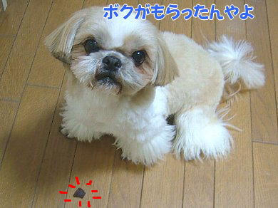 image1066.jpg