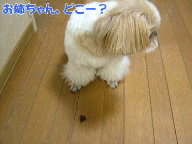 image1067.jpg