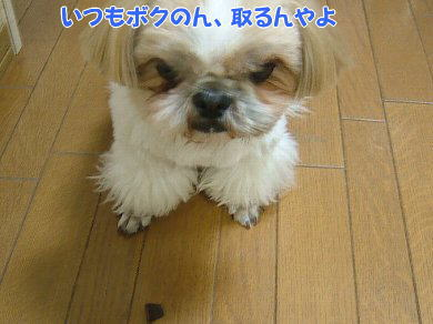 image1068.jpg