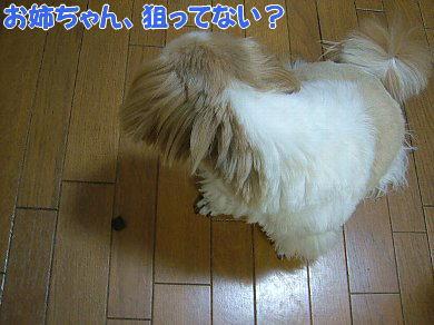 image1069.jpg