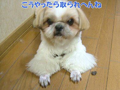 image1070.jpg