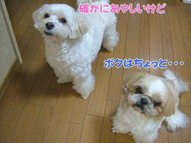 image1073.jpg
